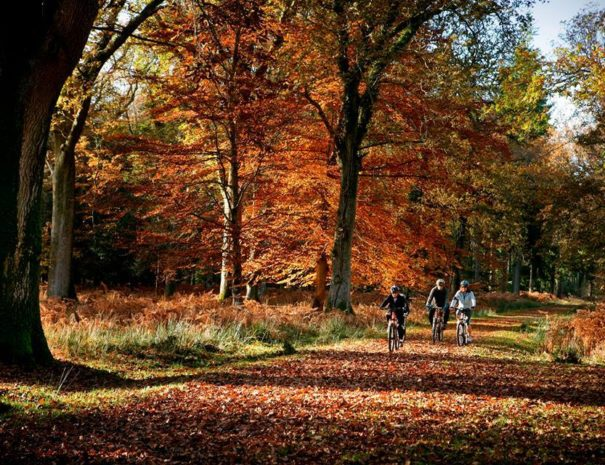 New Forest Bike Ride